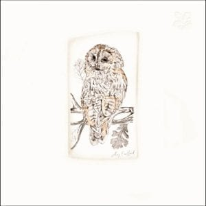 464003-national-trust-habitat=tawny-owl-greeting-card