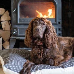 bbc-countryfile-cocker-spaniel