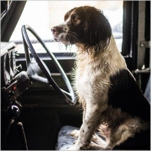 bbc-countryfile-springer-spaniel-in-a-land-rover