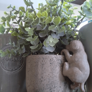 eucalyptus-potted-green-planter