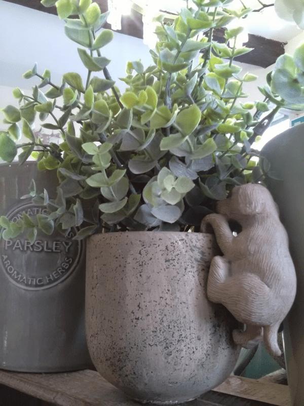 eucalyptus-potted-green-planter