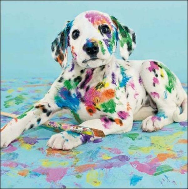 368103-natural-talent-dalmatian-dog-photo-art-card