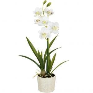 potted-cymbidium-orchid