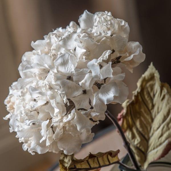 394706-dried-ivory-hydrangea-stem-full-bloom