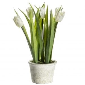 potted-white-tulips-ceramic-flower-pot