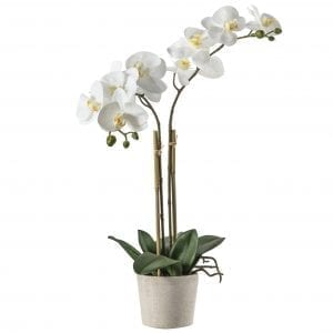 white-orchid-potted-ceramic-white-pot