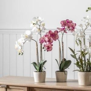 lifestyle-white-orchid-glazed-ceramic-flower-pot