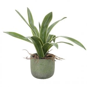 820907-parlane-potted-agave-green-cement-pot