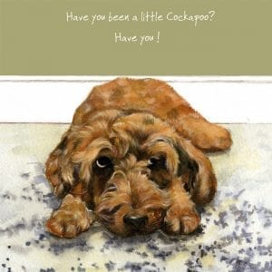 sqd110-cockapoo-the-little-dog-laughed
